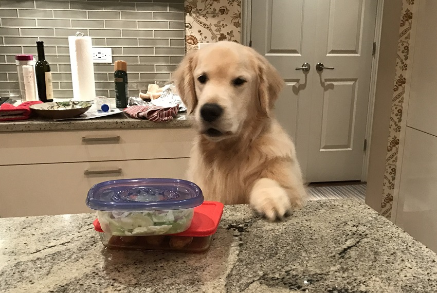 Healthy Tacos Recipe for Dogs