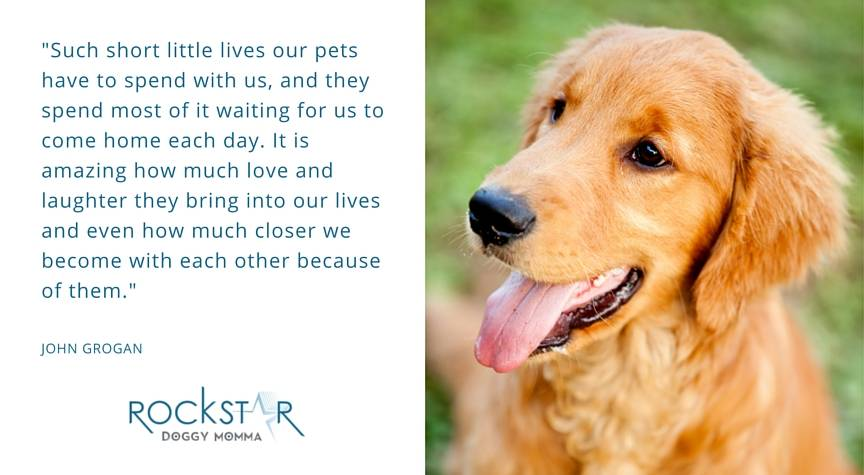 Puppy Love – Quote on Pets