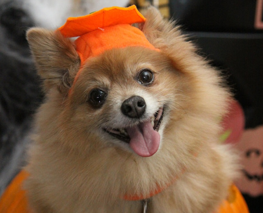 Halloween Safety Tips for Your Doggy