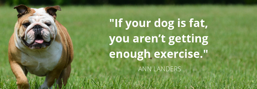 nn-Landers-quote-about-dogs