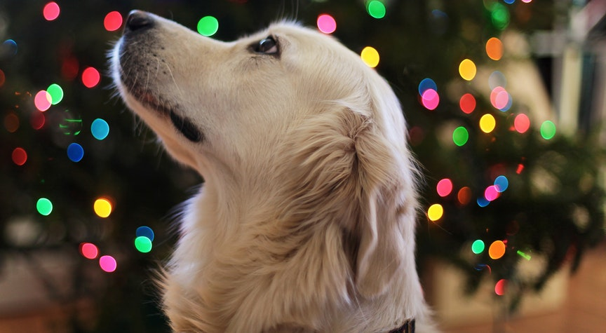 Holiday Traditions to Do With Your Dog