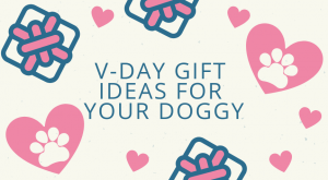 Vday Gift Ideas for Your Dog