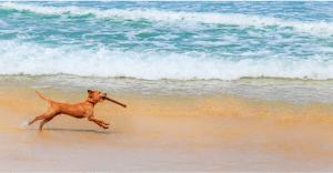 Switch Up Your Dogs Exercise Routine