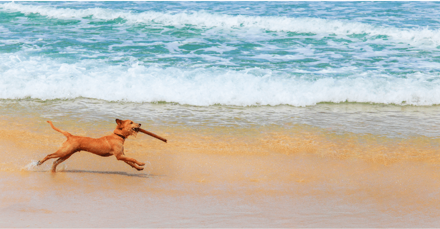 Ideas on How to Switch Up Your Dog's Exercise Routine