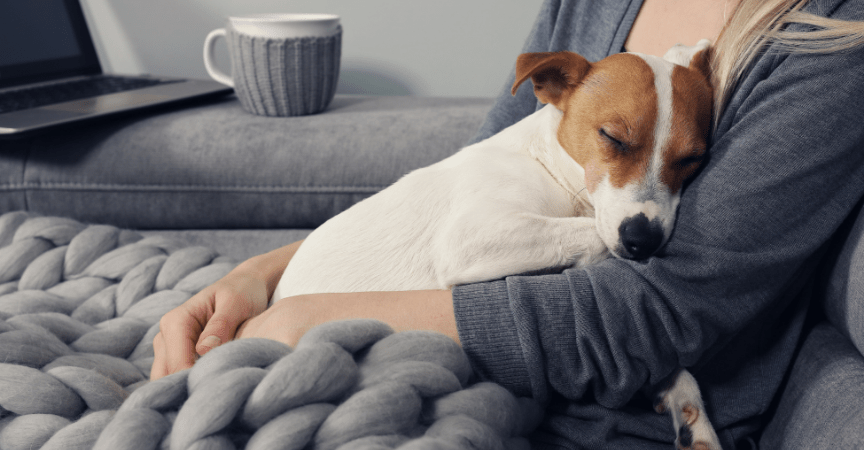 Showing Affection to Your Dog Will Benefit Both of You